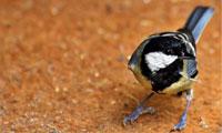 Птица счастья. История для взрослых