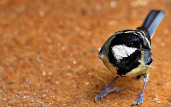 Рассказ Птица счастья